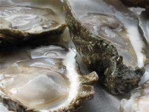 $1 Oysters @ Joe's Crab Shack Downtown | Corpus Christi | Texas | United States